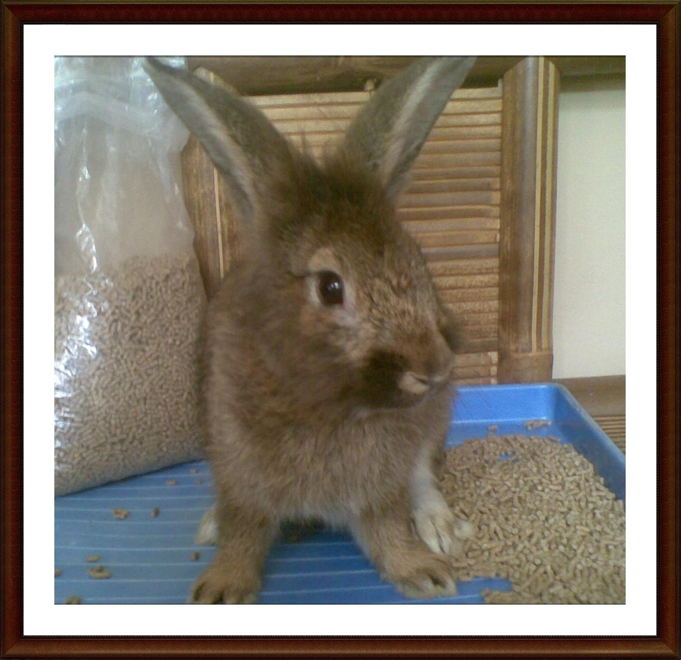 3R Rabbitry